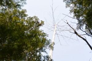 太くて真っ直ぐ天に伸びる竹の先端(五ヶ所浅間山山頂)