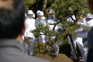 一般社団法人日本造園組合連合会による黒松奉納植樹(内宮)