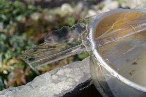 新開臥龍梅公園にある菅原神社の手水石の氷(伊勢市御薗町新開)