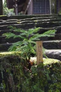 竹原神社(津市美杉町竹原)、2012年02月14日時点