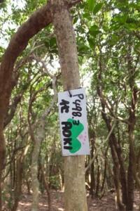 山伏峠三角点付近、五知道(磯部岳道)