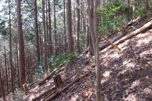 五知道(磯部岳道)を三十四丁地蔵町石からミスコース