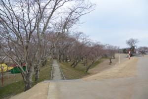 改修工事が完了した宮川堤から望む駿河堤