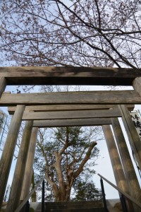 楠大明神の参道(改修工事が完了した宮川堤)