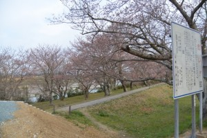 改修工事が完了した宮川堤から望む棒堤