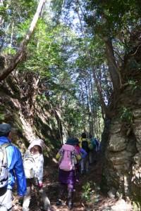 切り通し(栗谷橋(栗谷川)〜赤坂城跡)