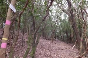 山伏峠への案内板、五知道(磯部岳道)