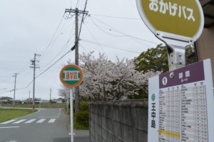 おかげバス 王中島 バスのりばと御薗神社の桜(伊勢市御薗町王中島)