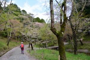 大滝峡 大台町青少年旅行村管理棟付近から水戸神神社へ