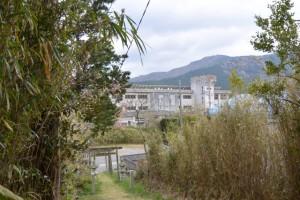 赤井神社の参道から望む伊勢市立上野小学校(伊勢市上野町)