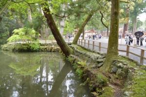 新緑の外宮(別宮の参道、亀石から御池と三ツ石)