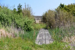湿地帯(国道42号から池の浦シーサイドパーク海水浴場方向へ)
