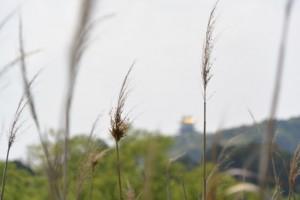 JR参宮線 松下駅付近から望む伊勢安土桃山文化村の安土城天主閣