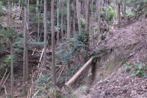 宮川支流、濁川ウォークの下見、山道整備