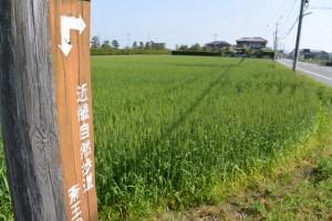 近畿自然歩道の道標(斎宮歴史博物館前)