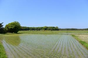 田園風景(明和町中海)