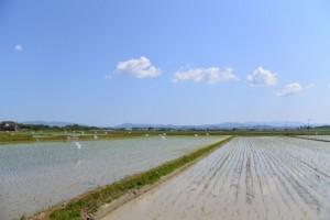 田園風景(松阪市井口中町)