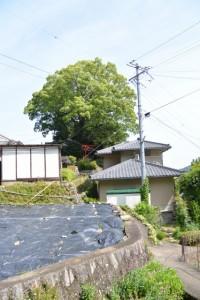 徐福の宮(熊野市波田須町)
