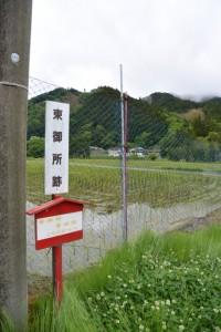 「東御所跡、雪姫桜→」の案内板