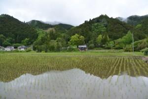 東御所跡、雪姫桜付近から遠望する北畠神社方向