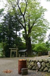 國津神社のケヤキ(津市美杉町太郎生)