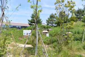 MieMuのミュージアムフィールドに移設された鳥居古墳