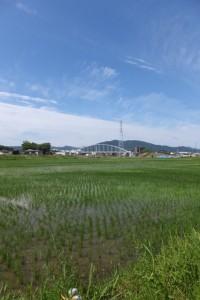 左岸の田んぼ道からの遠望する勢田川水管橋架設工事現場方向