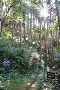 的山公園への遊歩道から鴨神社の参道へ