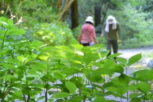的山公園への遊歩道にて
