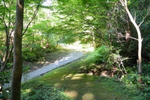 的山公園遊歩道から鴨神社の参道への分岐点付近
