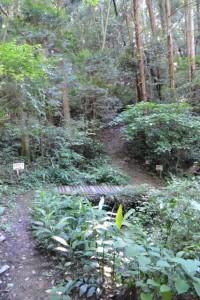 鴨神社の参道