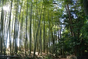 田乃家神社(皇大神宮摂社)付近の竹やぶ