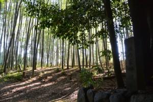 田乃家神社(皇大神宮摂社)からの風景