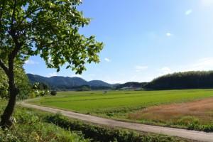 田乃家神社(皇大神宮摂社)付近の風景