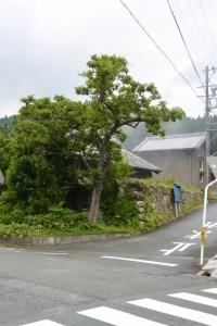 鯉橋〜天祥橋(県道22号)