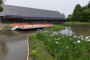 外宮 勾玉池の畔に建つ奉納舞台と「式年遷宮記念 せんぐう館」とハナショウブ