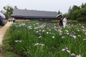 外宮 勾玉池の菖蒲園池