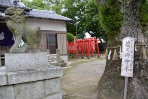 赤須賀稲荷神社の鳥居と楠の御神木(赤須賀神明社)