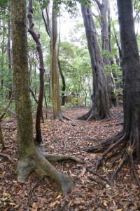 裏手にある石積の石壇から望む宇治山田神社(皇大神宮摂社)方向