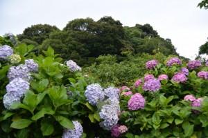 近くから望む宇治山田神社(皇大神宮摂社)の社叢、興玉の森