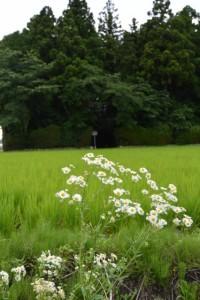 小社神社(皇大神宮末社)