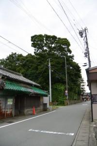 狭田国生神社(皇大神宮摂社)の社叢