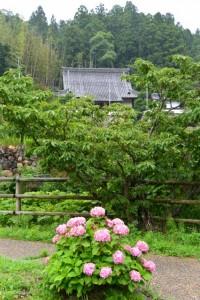紫陽花と桂林寺(伊勢市横輪町)