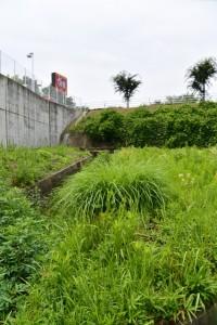 小丹神社から県道10号への近道(?)からすき家津上浜町店の看板の遠望