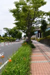 三重県総合文化センター付近