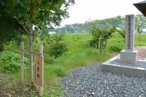 松井孫右衛門参道改良工事完成記念で植樹された八重桜、横輪桜