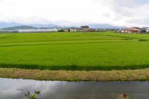一色渡船場跡から汐合大橋方向への堤防道路から望む田園風景