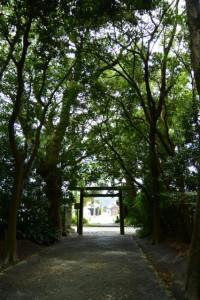 御塩殿神社(皇大神宮所管社)との参道から望む御塩道