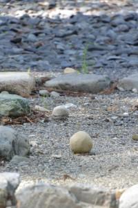 お気に入りの丸い石(外宮の古殿地)