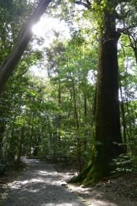 外宮 北御門参道から大津神社(豊受大神宮末社)方向への参道
